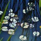 pond garden by ANNABEL   S. ALENTON