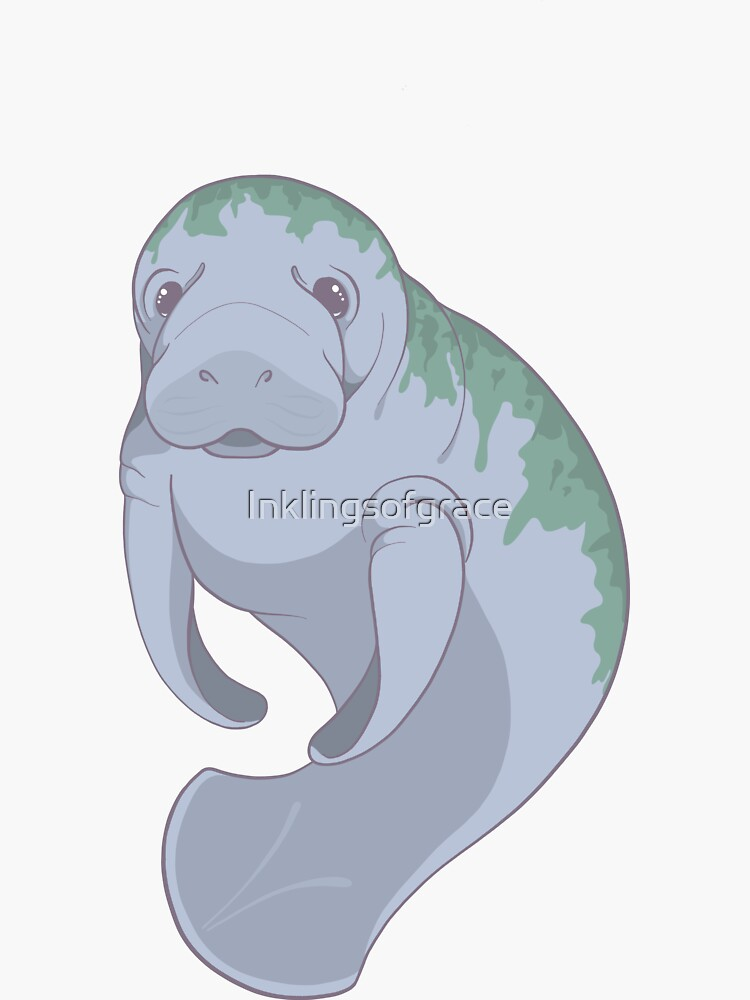 Cute Underwater Manatee with Algae, no background  by Inklingsofgrace