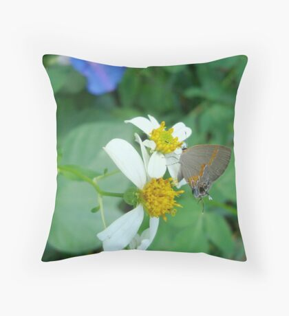 Banded Hairstreak in Spanish Needles Throw Pillow