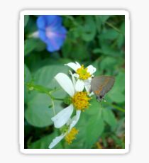 Banded Hairstreak in Spanish Needles Sticker