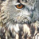 Owl Portrait by himmstudios