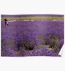 Girl in field of lavender Poster