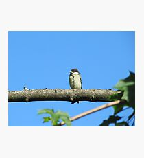 Angry baby bird on branch Photographic Print