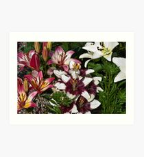 Lily Variety Art Print