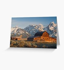 Bison at barn Greeting Card
