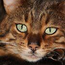 Bamboo - Emerald Eyes by Gilberte