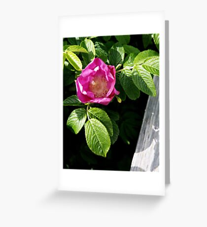 Lone Beach Rose Greeting Card