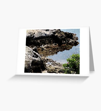 Master of the Cove Greeting Card