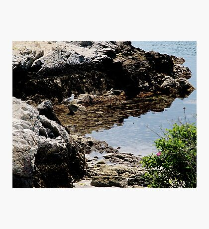 Master of the Cove Photographic Print