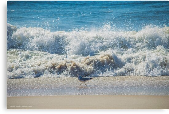 Larus Delawarensis - Ring-Billed Gull Passing Atlantic Ocean's Waves  by © Sophie W. Smith