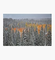 Winter in September #6 Photographic Print