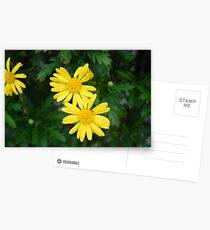 Gelbes Gänseblümchen Postkarten