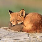 On My Way To Dreamland (Fox Kit) by akaurora