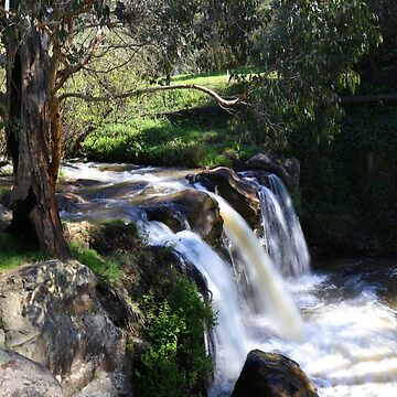 Old gum tree at waterfall by HauntedHills