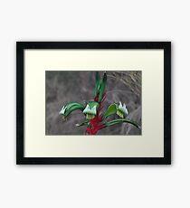 Green & Red Kangaroo Paw Framed Print