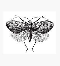 Antique Moth illustration Photographic Print