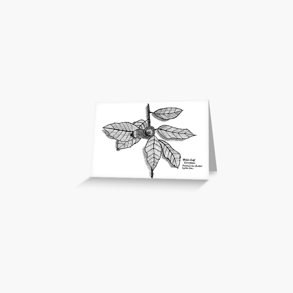 Seaside Holm Oak branch Greeting Card