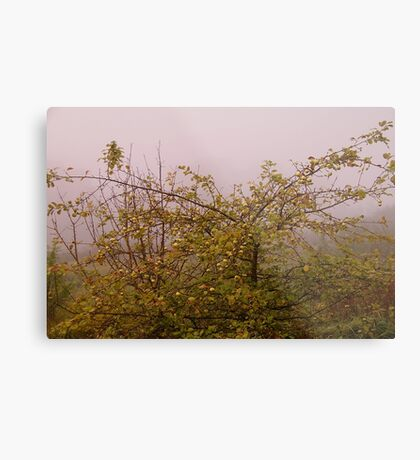 Foggy morning apple tree Metal Print