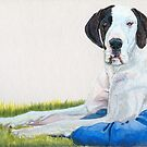Great Dane. Color: Harlequin  by doggyshop