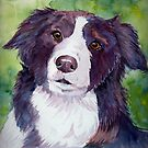Border collie. Coloristic by doggyshop
