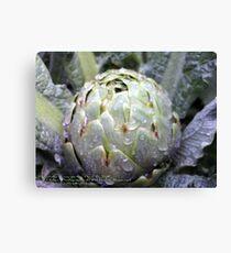 Artichoke in my garden; La Mirada, CA USA Lei Hedger Photography Canvas Print