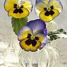 Pansies in Vases by Gabrielle  Lees