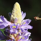 'Life in the fast lane' - Hover fly and Pontederia by Rivendell7