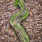 Green Tree Snake - Rainforest - NSW - Australia by Bryan Freeman