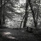 WOODLAND REST by Michael Carter