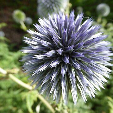 Allium flower by criso