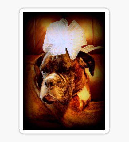 Boxer-Hund mit Bogen - Boxer-Hunde-Serie Sticker