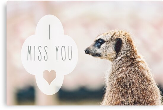 Miss You Meerkat by Vicki Field