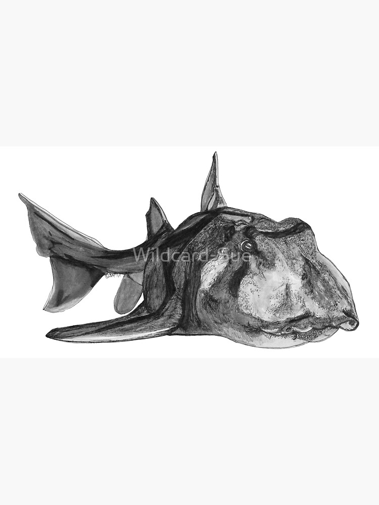 Jack the Port Jackson Shark by Wildcard-Sue