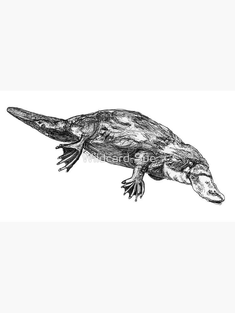 Fernando the Platypus by Wildcard-Sue