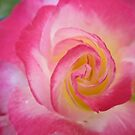 Pink Rose_0202 by JudithZelda