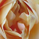 Erotic Rose_0330 by JudithZelda