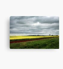 Canola Field Canvas Print