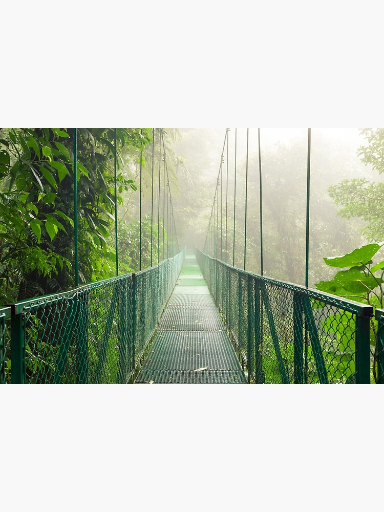 Suspension bridge in rainforest by Juhku