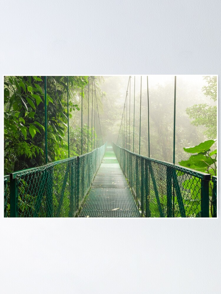 Alternate view of Suspension bridge in rainforest Poster