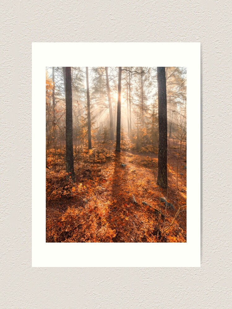 Alternate view of Foggy morning autumn forest Art Print