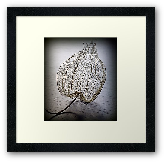 nature in lace by Clare Colins