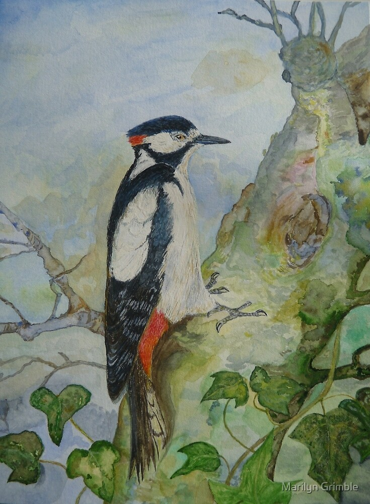 WOODY WOODPECKER - watercolor - sold. by Marilyn Grimble
