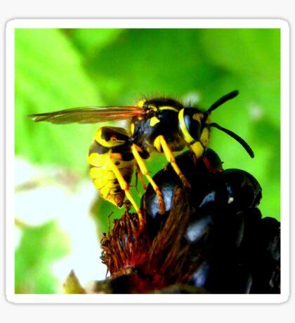 Blackberry with wasp Sticker