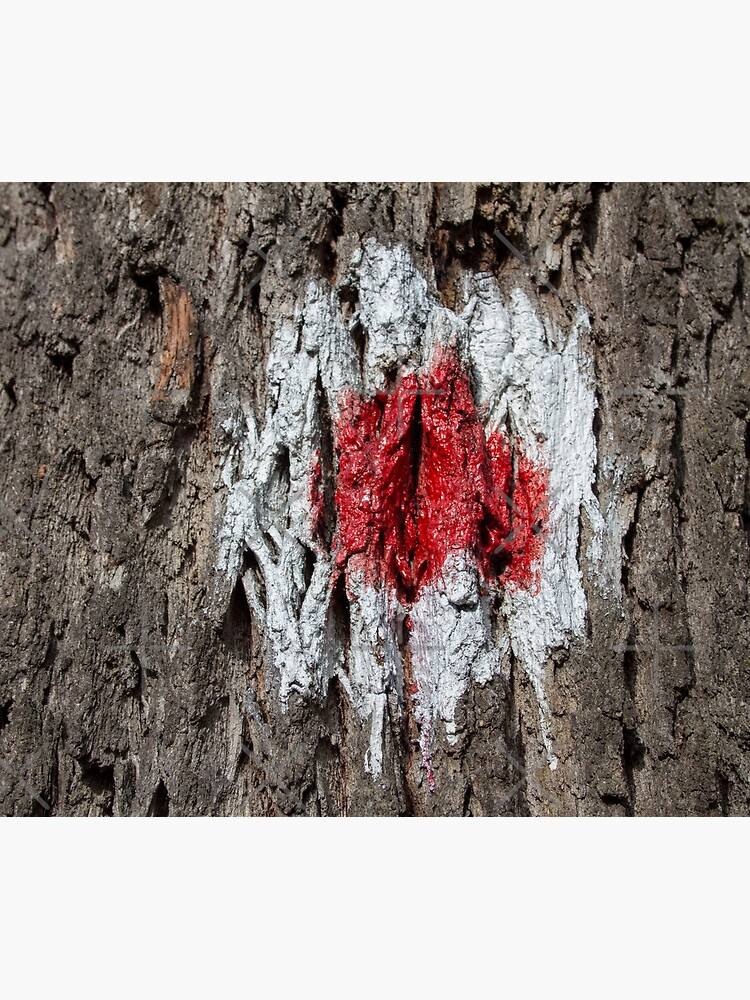 Forest tree, marked with red and white circle, wooded bark texture, original photography  by CWartDesign