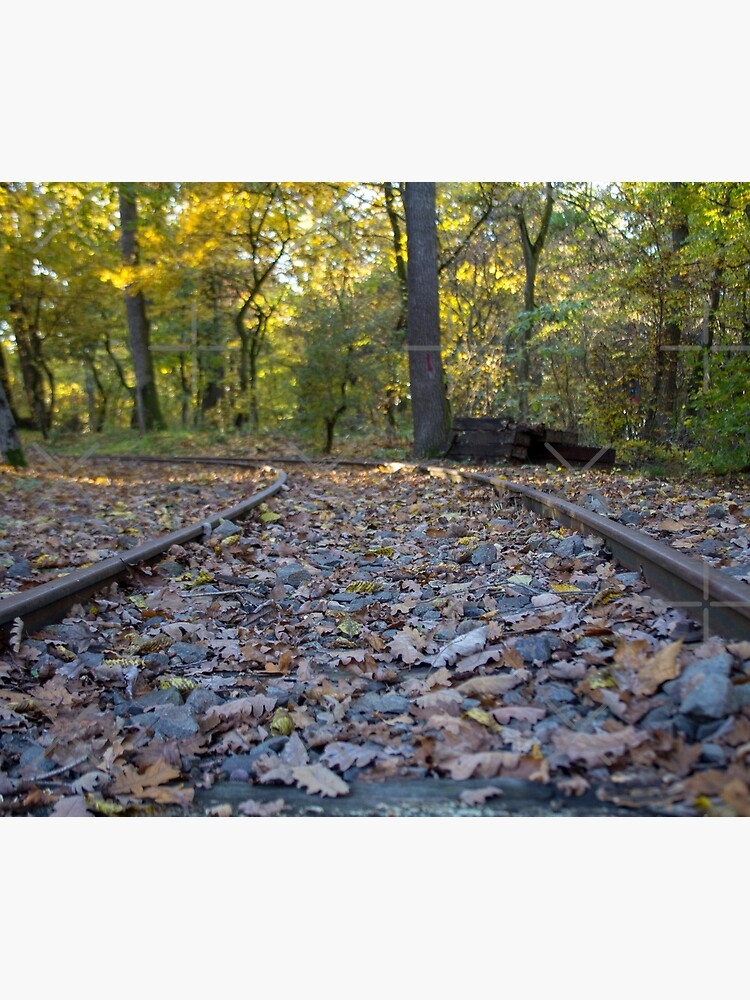 Railway through forest, pathway, partial shade, leaves on the ground, Autumn, original photography by CWartDesign