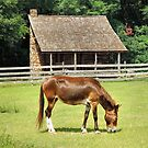 Country Mule by RickDavis