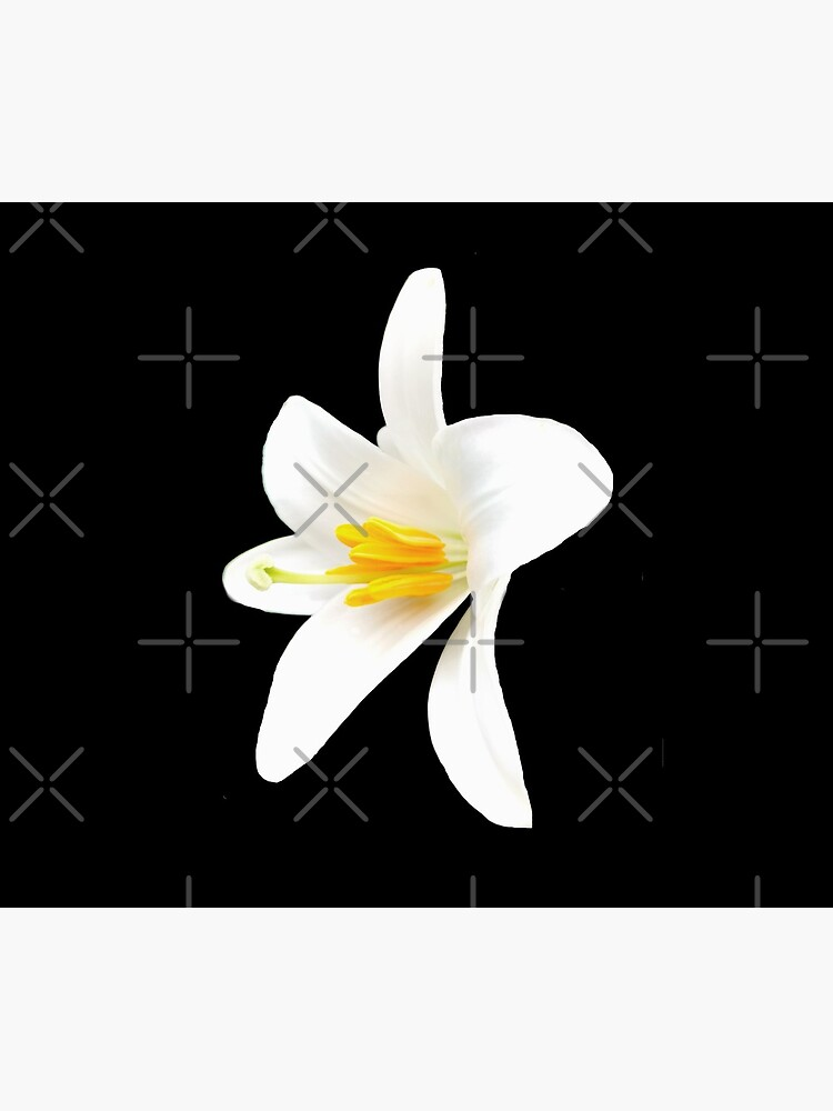 Isolated white lily by CWartDesign