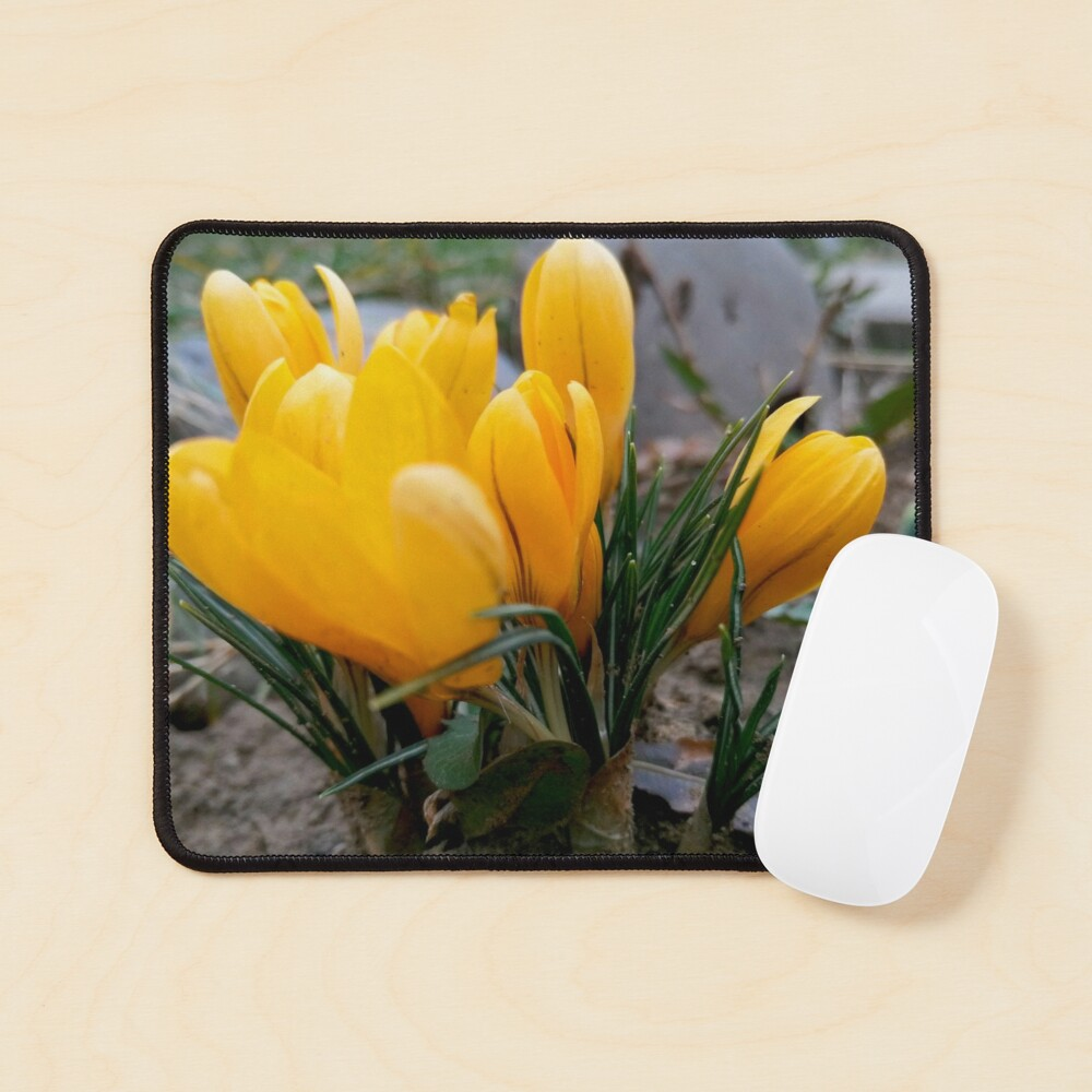Delicate, yellow, spring flowers, seen from their level Mouse Pad