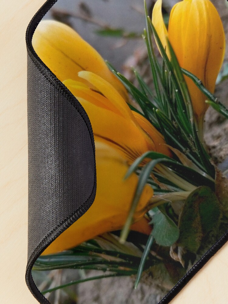 Alternate view of Delicate, yellow, spring flowers, seen from their level Mouse Pad