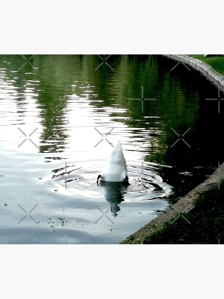 Duck with its head in the water and its white tail up on a lake with water with green reflections from the willows on the edge and blue from the sky by CWartDesign